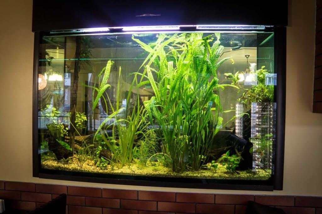 аквариум ресторан Буча